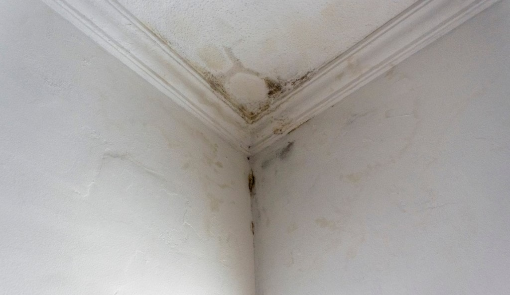 Signs Of Roof Leak